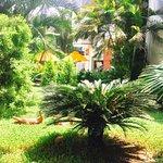 Citrus Goa Foto