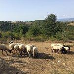 Photo de Poggio delle Civitelle Agriturismo