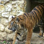Zoo Santillana