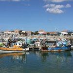 Photo de Le Port de la Cotinière