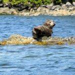Seal seen on Broken Is Grp kayaking day