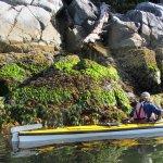 Kayaking close to shore