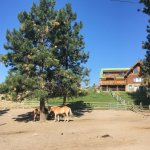 Photo de Wildhorse Mountain Guest Ranch