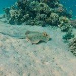 Photo of Diving Ocean Makadi Bay
