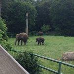 baby elephant too!