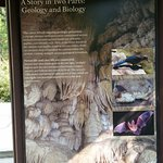 Geology & Biology