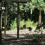 wild turkeys!
