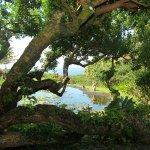 Foto de Maui Eco Retreat