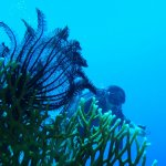 Photo of Diving Center Dive Club Italiano