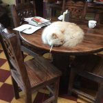 This cat was tethered on long lease 24/7. It was allowed to walk, sit and lie on breakfast table