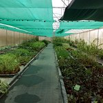 Meticulously cleaned and labeled greenhouses. Picture is one of several. Very healthy plants