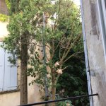 Neighborhood kittens playing in a tree outside of the kitchen while we had breakfast - delightfu