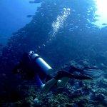 Photo de Forever Dive