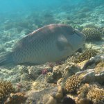 Foto di Red Sea Coral Reef Snorkeling at Ras Mohamed National Park with Lunch