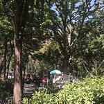 N.Y. Dosas照片