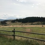 Howlers Inn Bed & Breakfast and Wolf Sanctuary Photo