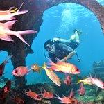 Photo of Atlantis Divers