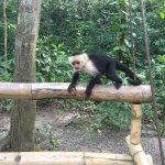 Foto de Gumbalimba Park