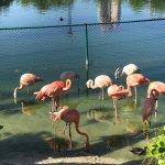 Photo of Fisher Island Hotel & Resort
