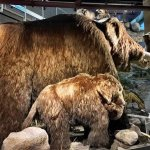 Adult and Calf Mammoth