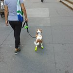 Even the Wall Street dogs wear designer trainers!
