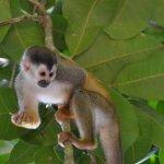 Squirrel monkeys were at the beach