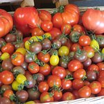 colourful selection of tomatoes