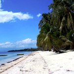 White sand beach with palm trees at Coral Cay Resort