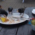 outside table - Haven Inn - Mudeford Quay