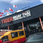 tiger muay thai.