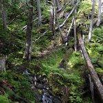 Mount Revelstoke National Park รูปภาพ