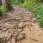 Path can be a bit difficult in parts due to tree roots and rocks