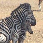 Photo of Horseback Africa