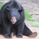 One of the male bears taking a break!