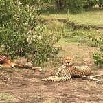 cheetah with two small cubs on an impala kill