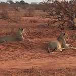 Photo of Ombretta Tours & Safaris - Day Tours