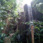 Super décor dans la serre Amazonienne avec petite cascade.