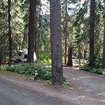 Coldspring Campsite #31
