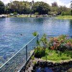 Ponds Foto