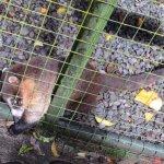 Sneaky Coati