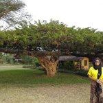 beautiful umbrella tree