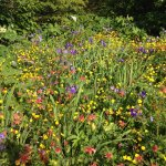 Has the best displays of native wildflowers in Haines