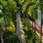 Tree-filled pathway at Secret Pavilion