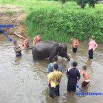 Photo de Ran-Tong (Save and Rescue Elephant Centre)