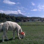 Foto de Nagato Farm