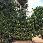 Dalat Flower Park Foto