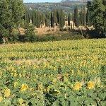 Sunflower fields near the house