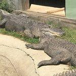 Zdjęcie York's Wild Kingdom Zoo and Fun Park