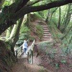 Upper path through woodland