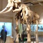 Bones of an Elephant